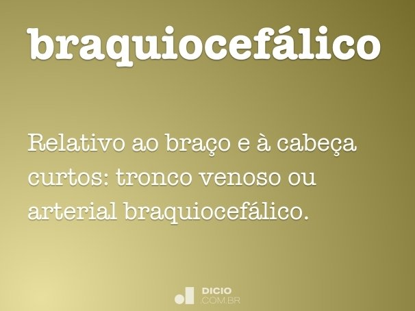 braquiocefálico