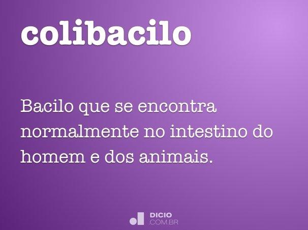 colibacilo