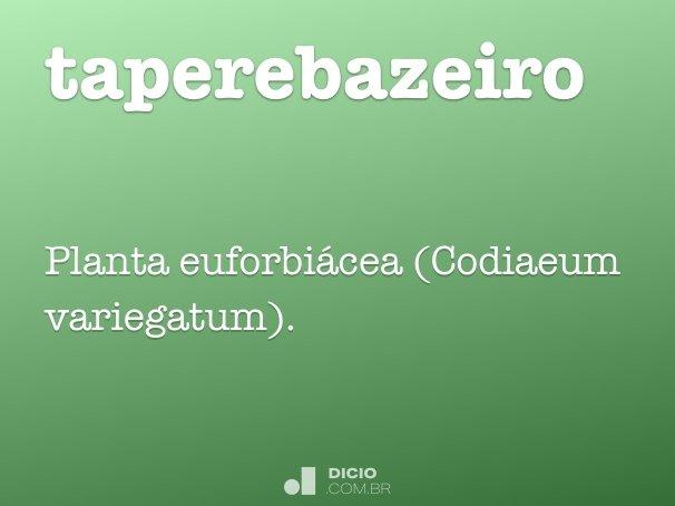taperebazeiro